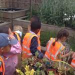 BMCG Young Gardeners