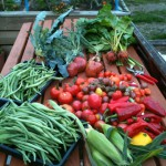 BMCG Harvest time!