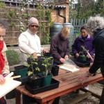 BMCG Seniors' gardening club. May 2015