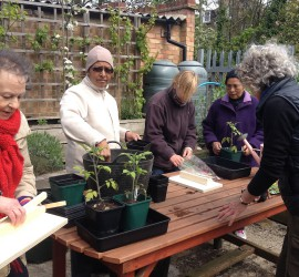 BMCG Seniors' gardening club. May 2015